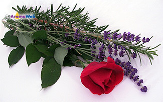 Lavender and a Rose Surrounding a Sprig of Rosemary