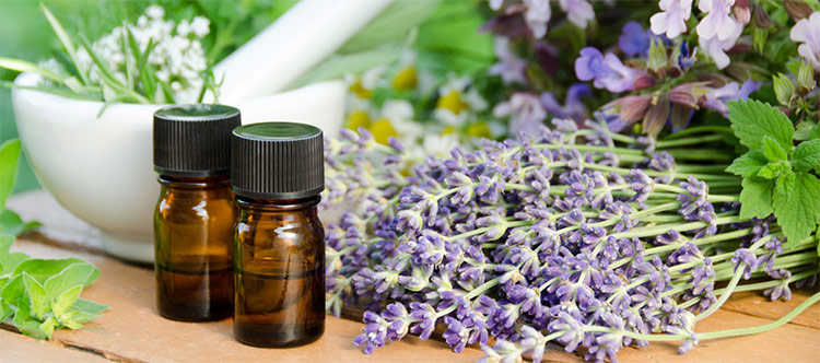Using Latin Names (Botanical Names) With Essential Oils is Important