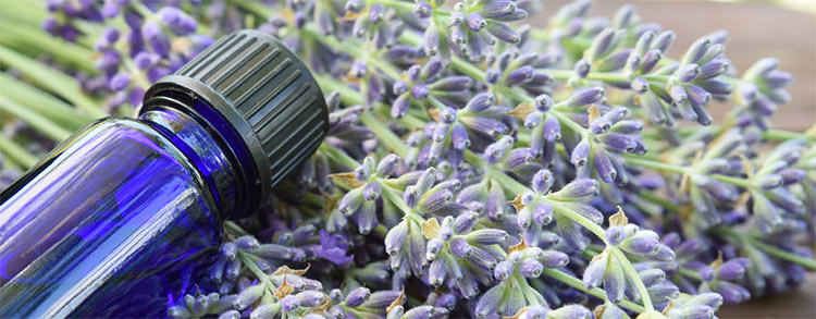 Essential Oil and Aromatherapy Resources