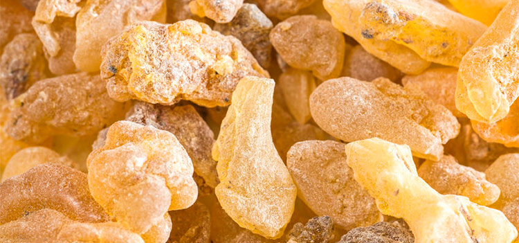 Frankincense Olie Kopen.Frankincense Essential Oil Uses And Benefits Aromaweb
