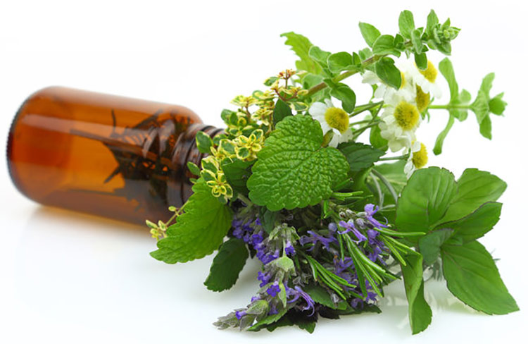 The Parts of Plants That Produce Essential Oil