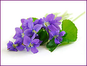 Violets with Leaves