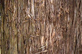 Virginian Cedarwood Bark