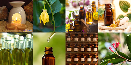 'Essential Oils and Aromatherapy Directory' from the web at 'http://www.aromaweb.com/images/home/essential-oil-aromatherapy-directory.jpg'
