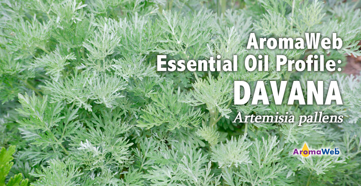 Davana Essential Oil Uses And Benefits Aromaweb