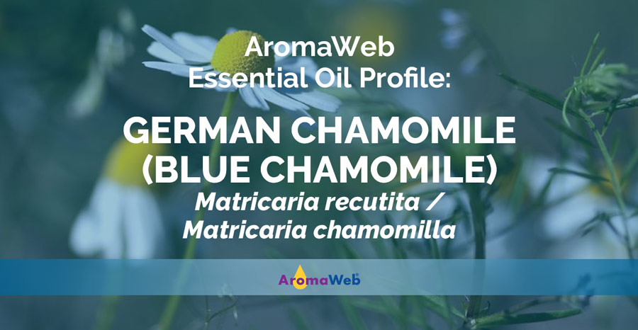 German Chamomile Essential Oil Uses and Benefits   AromaWeb
