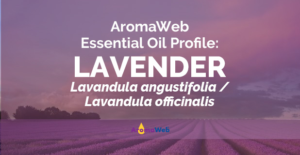 Lavender Essential Oil Uses And Benefits Aromaweb