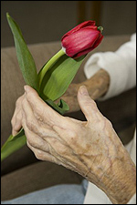 Elderly Woman with Arthritis Holding a Tulip