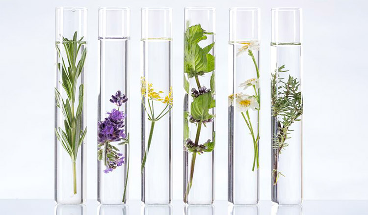 Essential Oil Regulation by the FDA