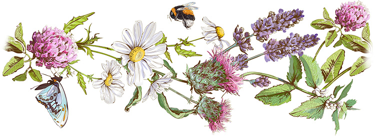 Butterfly, Bee and Beautiful Selection of Herbs