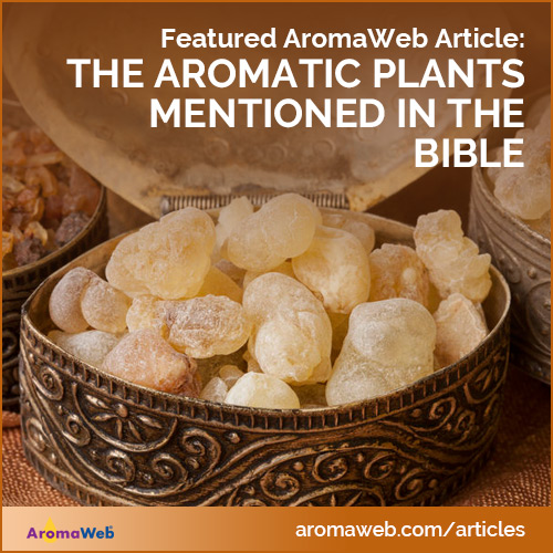 Aromatic Plants of the Bible