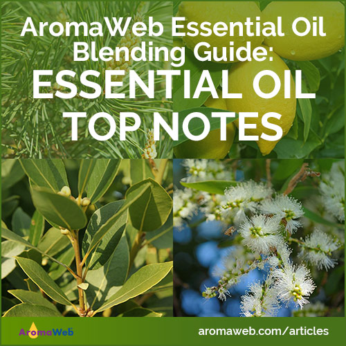 Essential Oil Top Notes