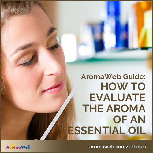 How to Evaluate the Aroma of an Essential Oil