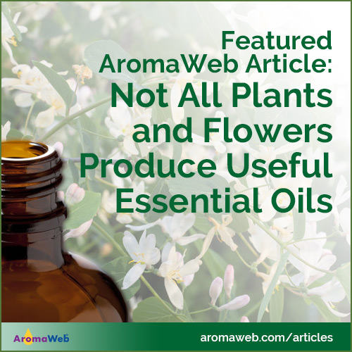 Guide Explaining Why Not All Plants and Flowers Produce Useful Essential Oils