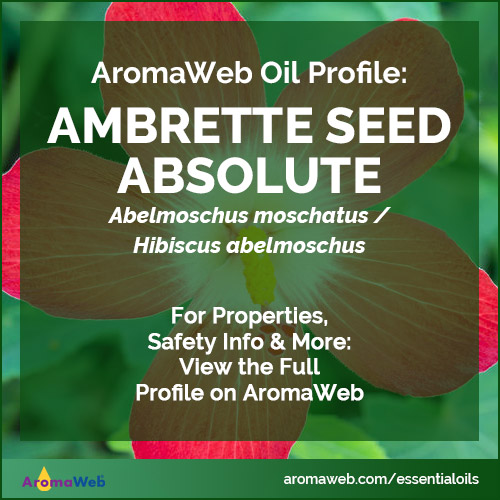 Ambrette Seed Absolute