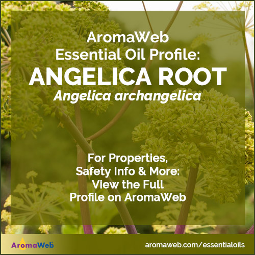 Angelica Root Essential Oil Profile
