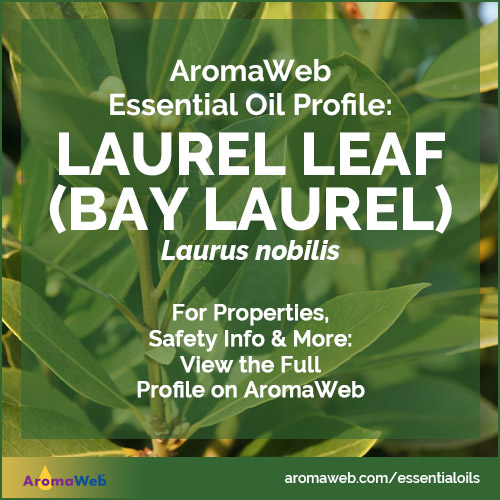 Bay Laurel Essential Oil Profile