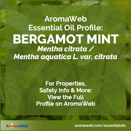 Bergamot Mint Essential Oil Profile
