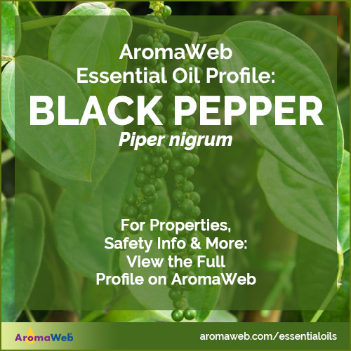 Black Pepper Essential Oil Profile