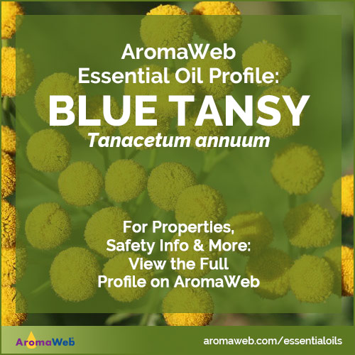 Blue Tansy Essential Oil Profile