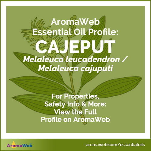 Cajeput Essential Oil Profile