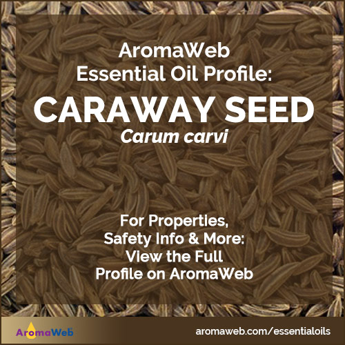 Caraway Seed Essential Oil Profile
