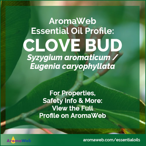 Clove Bud Essential Oil Profile