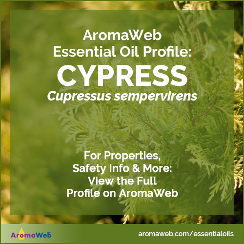 Cypress Essential Oil Uses and Benefits | AromaWeb