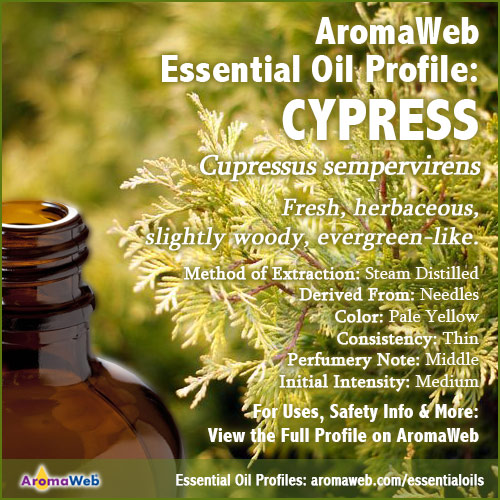 Cypress Essential Oil Profile