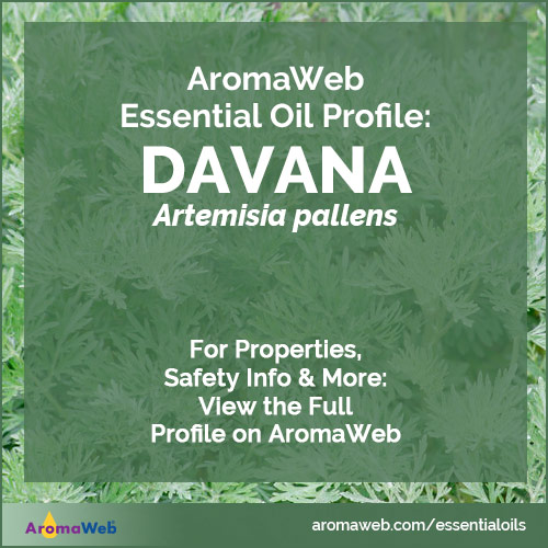 Davana Essential Oil Profile
