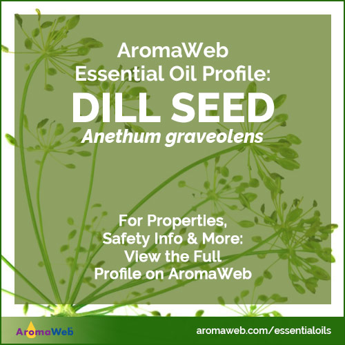 Dill Seed Essential Oil Profile