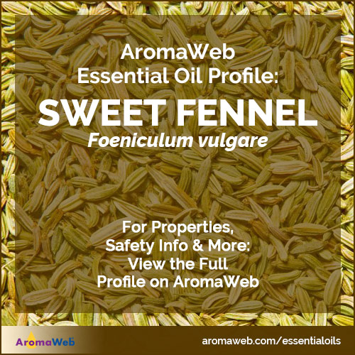 Fennel Essential Oil Profile