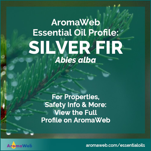 Fir Essential Oil Profile