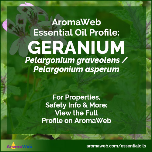 Geranium Essential Oil Uses and Benefits | AromaWeb