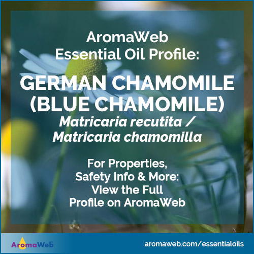 German Chamomile Essential Oil Profile
