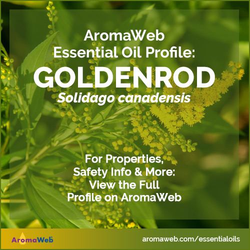 Goldenrod Essential Oil Profile