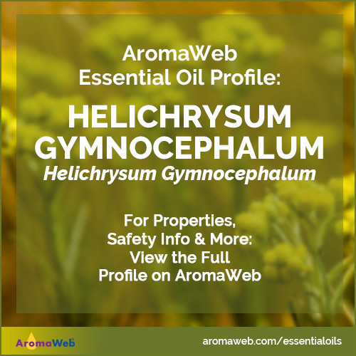 Helichrysum Gymnocephalum Essential Oil Profile