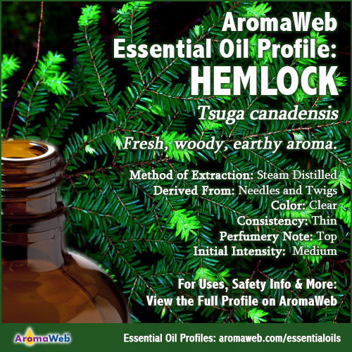 Hemlock Essential Oil Profile