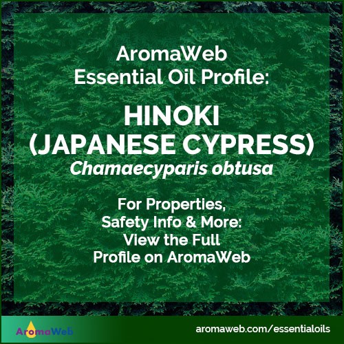 Hinoki Essential Oil Profile