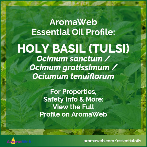 Holy Basil Essential Oil Profile