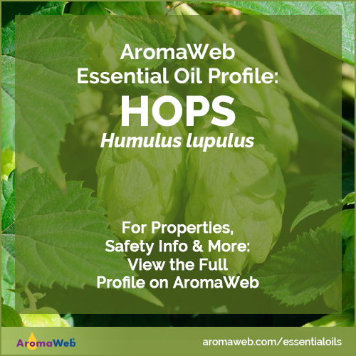 Hops Essential Oil Profile