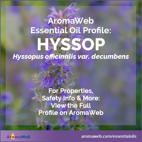 Hyssop Essential Oil Profile