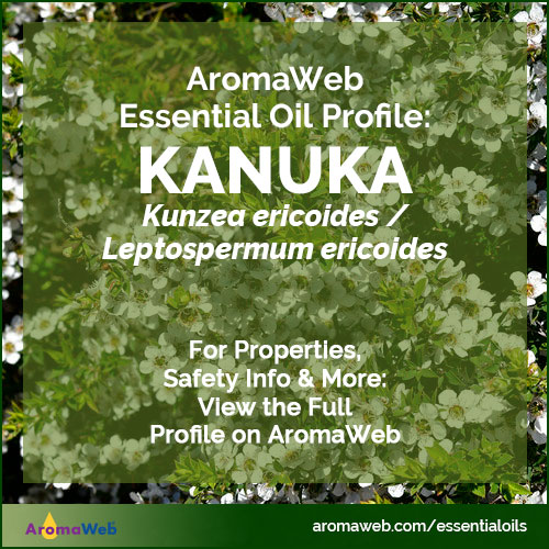 Kanuka Essential Oil Profile