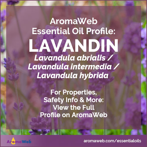 Lavandin Essential Oil Profile
