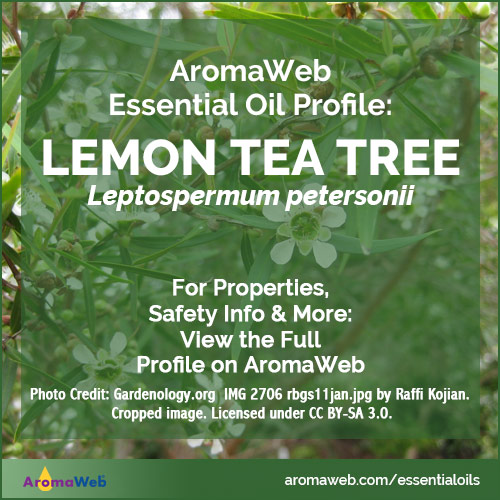Lemon Tea Tree Essential Oil Profile