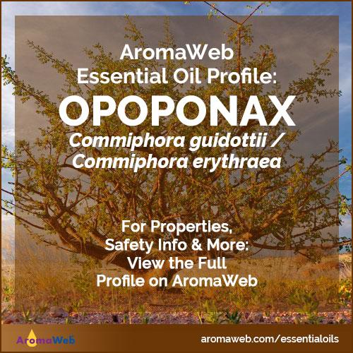 Opoponax Essential Oil Profile