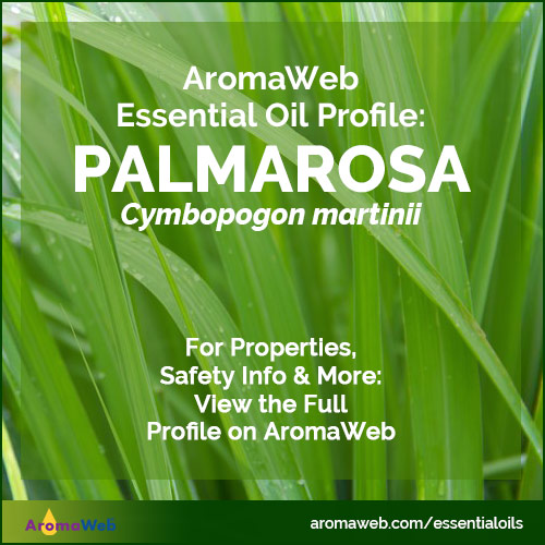 Palmarosa Essential Oil Profile