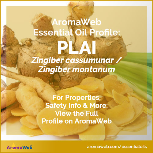 Plai Essential Oil Profile