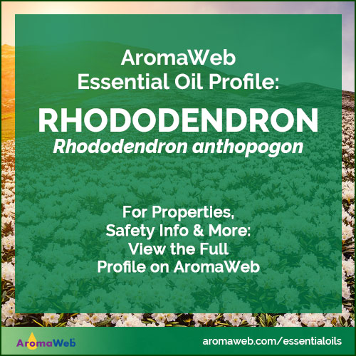 Rhododendron Essential Oil Uses and Benefits | AromaWeb