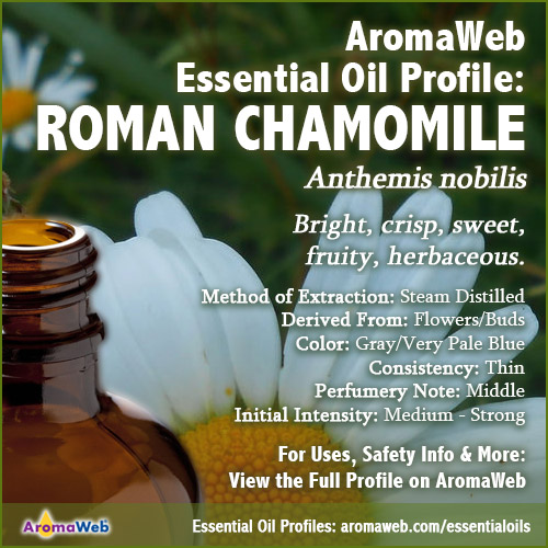 Roman Chamomile Essential Oil Profile